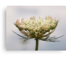 Prairie Lace Canvas Print