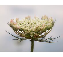 Prairie Lace Photographic Print