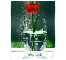 Window Spring Poster
