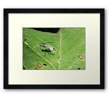 Fly on Leaf 2 Framed Print