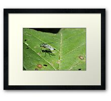 Fly on Leaf 2 Framed Print