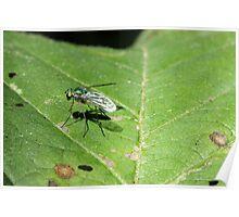 Fly on Leaf 2 Poster