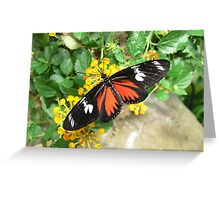 Macro Butterfly - Franklin Park Conservatory Greeting Card