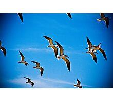 Sea Birds Photographic Print