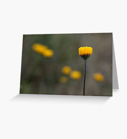 Plains Bitterweed Greeting Card