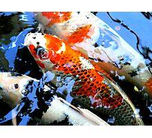 Koi Fish - Franklin Park Conservatory  Photographic Print
