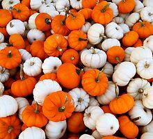 Pumpkins by Laura Kalcheff