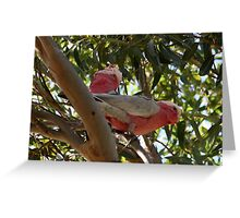 Another viewpoint ! Greeting Card