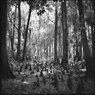 Cypress Forest by AnalogSoulPhoto