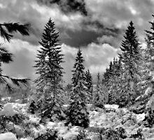 WINTER by pdsfotoart