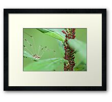 Daddy Long Legs Snack Time Framed Print