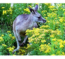 Grey On Yellow Photographic Print