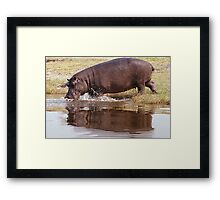 Charging Hippo Framed Print