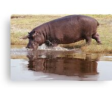 Charging Hippo Canvas Print