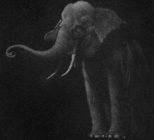 Elephant by Anthony DiMichele