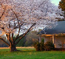 Last Light of Day in Early Spring by Rodney Williams