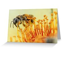 Bee Collecting Pollen 2 Greeting Card