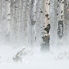 Winter Wind by Kim Barton