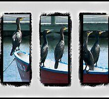 Triptych of Cormorants by DeerPhotoArts
