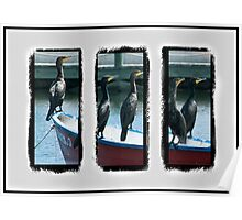 Triptych of Cormorants Poster