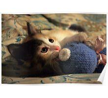 Calico Kitten Chronicles - 1 Poster