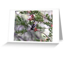 New Holland Honeyeater South West WA Greeting Card