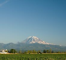 Mount Rainier and Cornfield by Stacey Lynn Payne