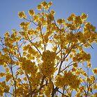 In Bloom by dwcdaid