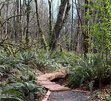 Pathway Through Pacific Northwest Forest by Stacey Lynn Payne