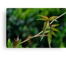 Vine Leaf-Rch Cucamonga, Ca Canvas Print
