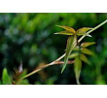Vine Leaf-Rch Cucamonga, Ca Photographic Print