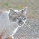Kitty by Debbie Sickler
