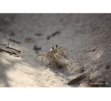 Crabs fight Photographic Print