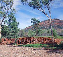 Creekbed, Aroona Valley, Flinders Ranges, South Australia by Adrian Paul