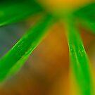 Stellar Foliage by duncandragon