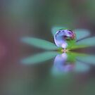 An Autumn Clover Droplet by Kymie
