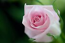 Soft Pink Rosebud by Renee Hubbard Fine Art Photography