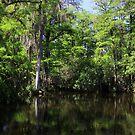 Big Cypress Swamp by kathy s gillentine