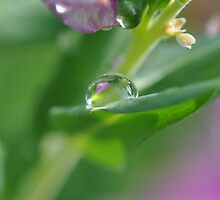 Raindrop Reflections by MissyD
