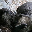Otter Affection by Rowan Nancarrow
