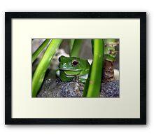 Little Frog Prince Framed Print