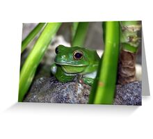 Little Frog Prince Greeting Card