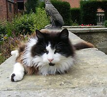 Cat relaxing Washington Old Hall by monkeyferret
