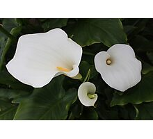 White Lilies II Photographic Print