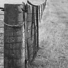 Western Plains fence line by phillip wise