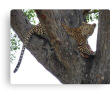 Leopard protecting her kill Canvas Print
