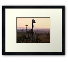 Surveying the Savanna at dawn Framed Print