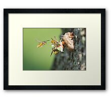 Something Meaty For The Main Course Framed Print