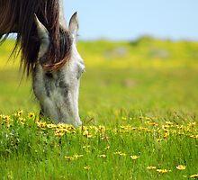 ~Quarter  Horse~ by Julie-Anne Wagner