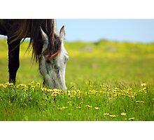 ~Quarter  Horse~ Photographic Print
